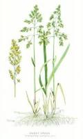 "[Image Source: Clark, George and Fletcher, James: ""Farm Weeds"" (1906)... Public Domain]"